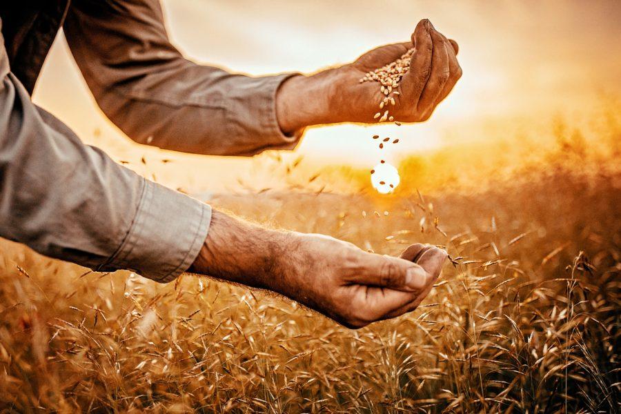 seguro rural seguro agricola
