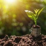 as moedas com a planta na parte superior no fundo verde da natureza trazem o conceito do crescimento do agronegócio com o crédito agrícola