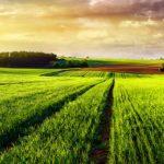 o-que-e-e-como-funciona-o-credito-rural