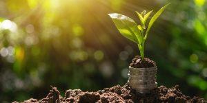 Crédito agrícola no Brasil: tire suas dúvidas sobre esse financiamento