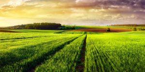 O que é e como funciona o crédito rural?